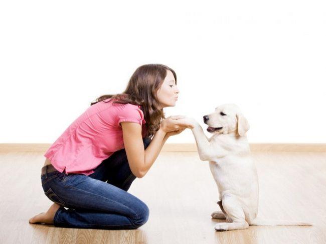 3 Популярні помилки у вихованні щеняти