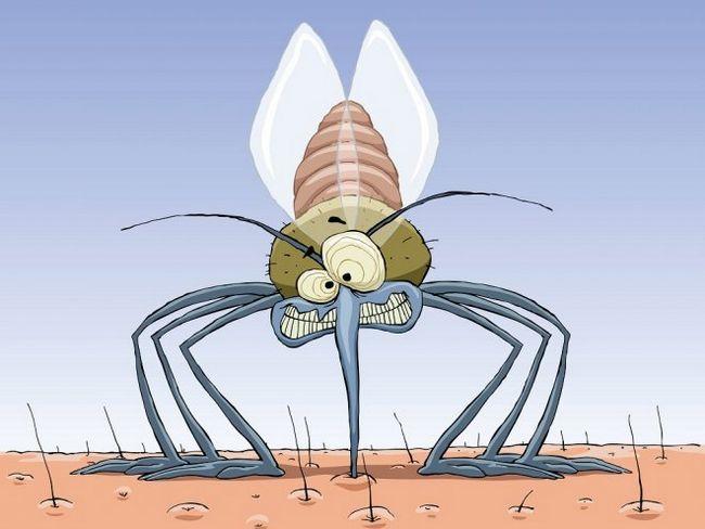 4 Простих способу, як позбутися від комарів в квартирі