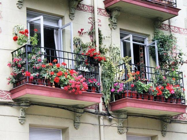 5 Красивих витких рослин для балкона