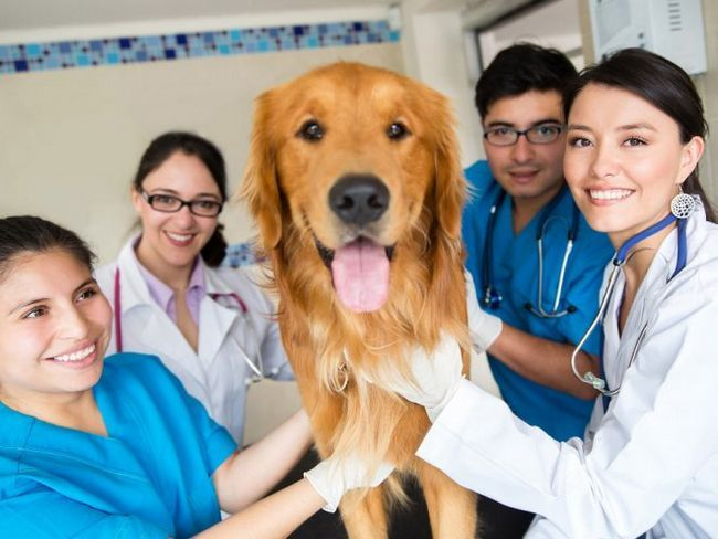 7 Рад власнику домашньої тварини