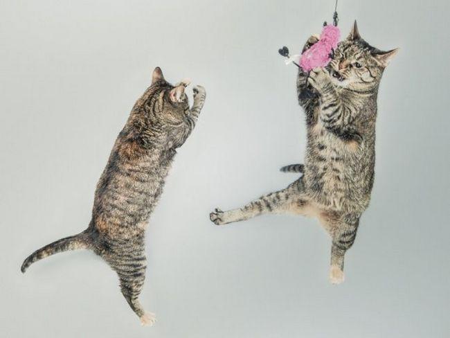 7 Способів розважити кішку