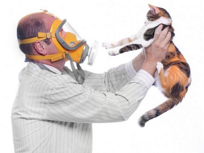Алергія на кота - як з нею впоратися?