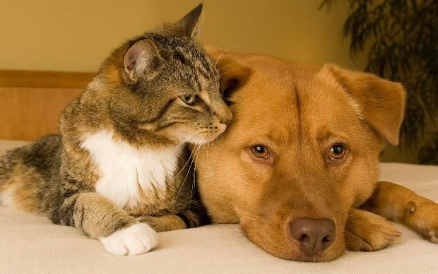 алергія на котів і собак