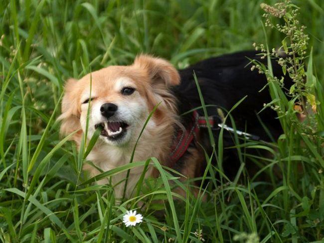 Цілющі трави для домашніх тварин