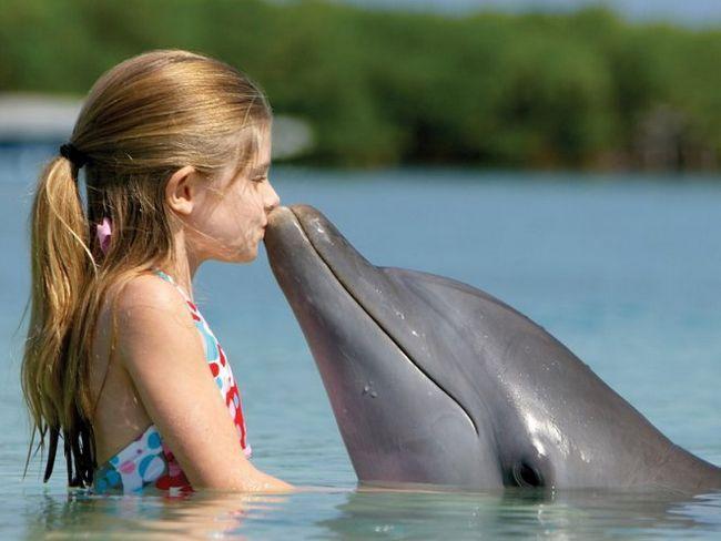 Дельфінотерапія для дітей - у чому її дивовижна користь?