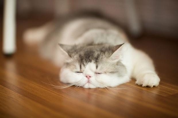 Кот лежить на підлозі