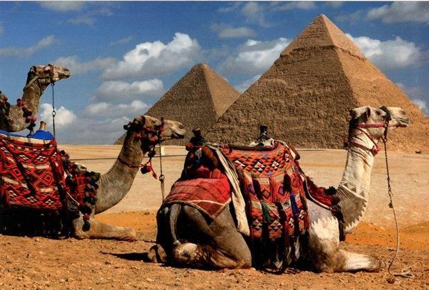 піраміди і верблюди в Єгипті