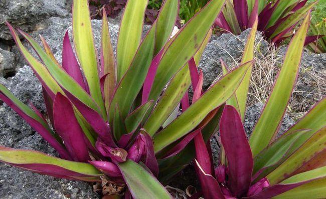 Гороскоп рослин: як вибрати рослина по знаку зодіаку?