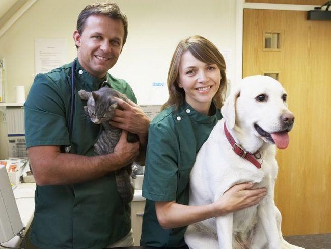 Готуємося до відвідування ветеринара
