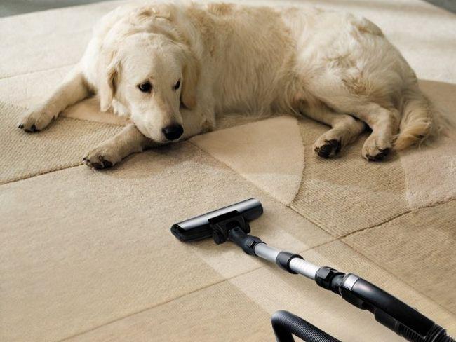 Як швидко і ефективно почистити килим домашніми засобами?