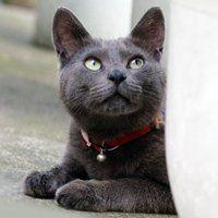 Як позбутися від бліх у кішки, ефективні способи боротьби
