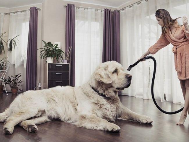 Як позбутися від шерсті тварин в квартирі?