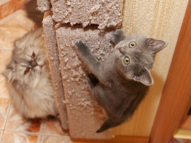 Як відучити кішку дряпати меблі?