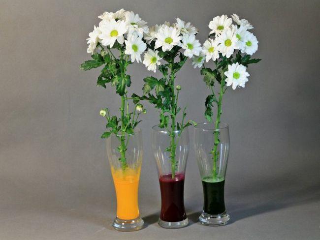 Як пофарбувати квіти - випробувано на собі