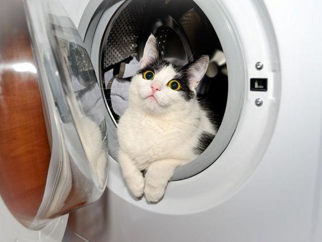 Кот в пральній машині