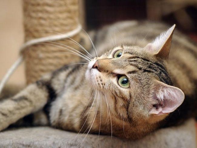 Як зробити когтеточку для кота своїми руками?