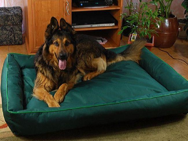 Як зробити лежак для собаки і вибрати для нього підходяще місце?