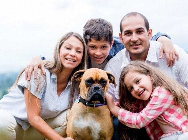 Як вибрати собаку для себе?