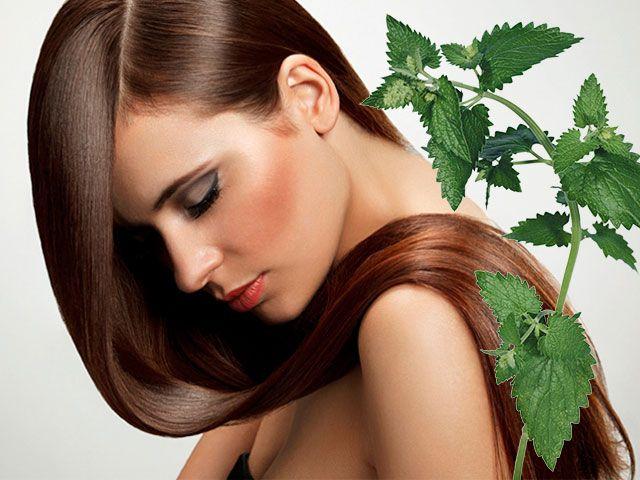 Кропива для волосся від випадіння та для росту