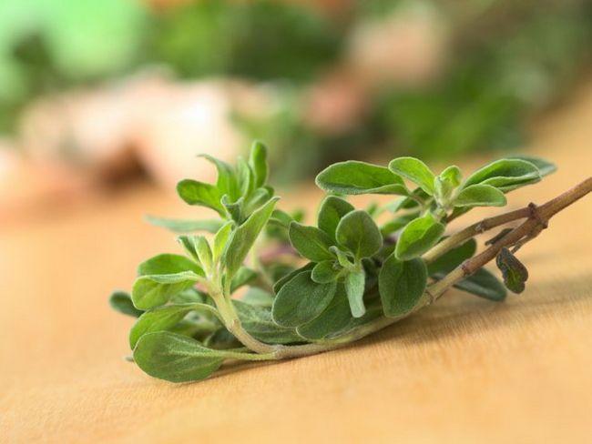Майоран - пряність з незрівнянним ароматом
