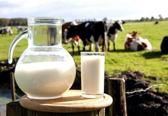 Молоко - користь чи шкода