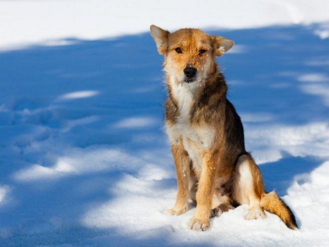 Чи потрібно надавати допомогу бездомним тваринам?
