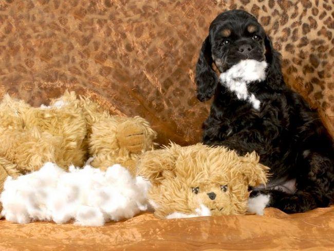 Відучує домашніх тварин від шкідливих звичок