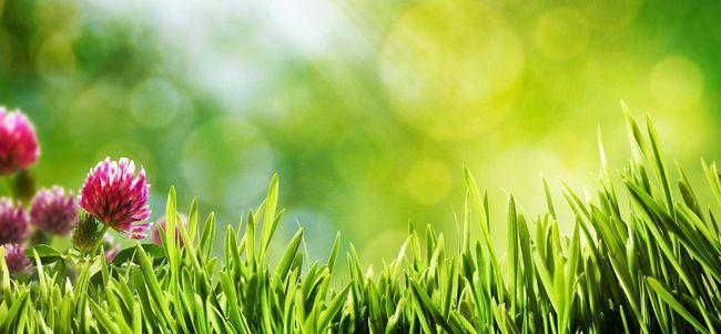 Озеленення ділянок: поради і рекомендації фахівців