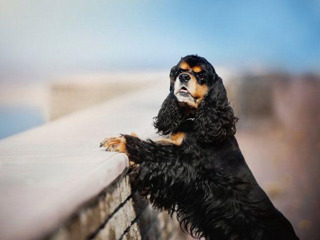 Загубилася собака - що робити?