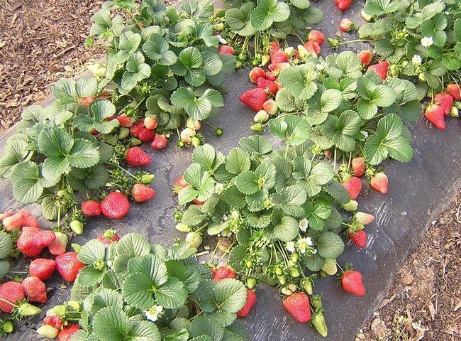 Переваги використання агроволокна від дім сад місто плюс