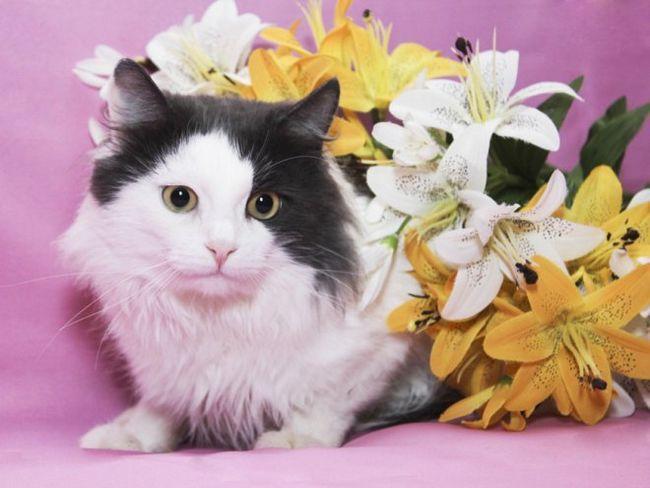 Розкриваємо секрети поведінки кішок