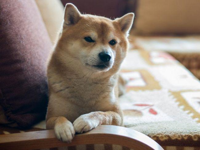 Собака в квартирі - як підтримувати чистоту?