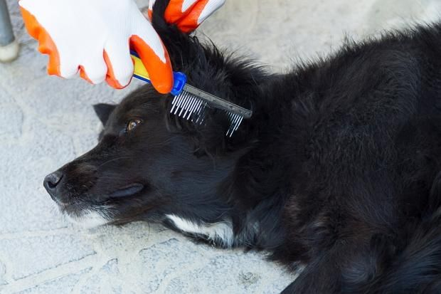вичісуйте собаку