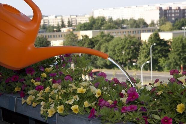 полив квітів на балконі