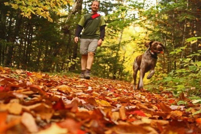 Осінній похід чоловік з собакою