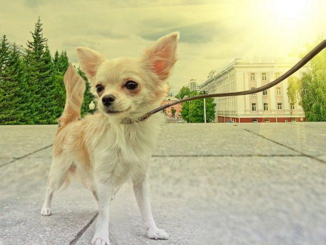 Вибираємо кращий нашийник і повідець для собаки