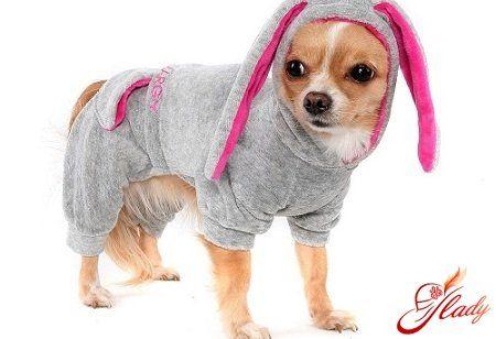 Викрійки одягу для собак дрібних порід своїми руками: особливості побудови креслення і пошиття на прикладі майстер-класу з виготовлення спортивного комбінезона для чихуахуа